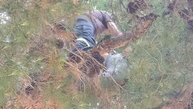 Photo of عكار | عناصر الدفاع المدني يتسلقون حتى أكثر من 15 متراً لإنقاذ قطة