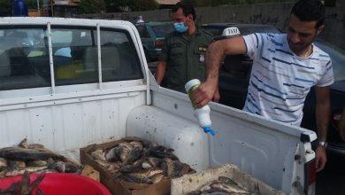 Photo of صورة صادمة | سمكٌ ملوث في بيروت!