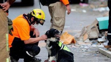 صورة تصفيق تحيةً لجهود الكلب فلاش! (فيديو)